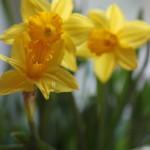 Spring Blooms 2012