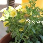 Gardening it Up – 2012