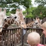 Zoo Day & Feeding the Giraffes